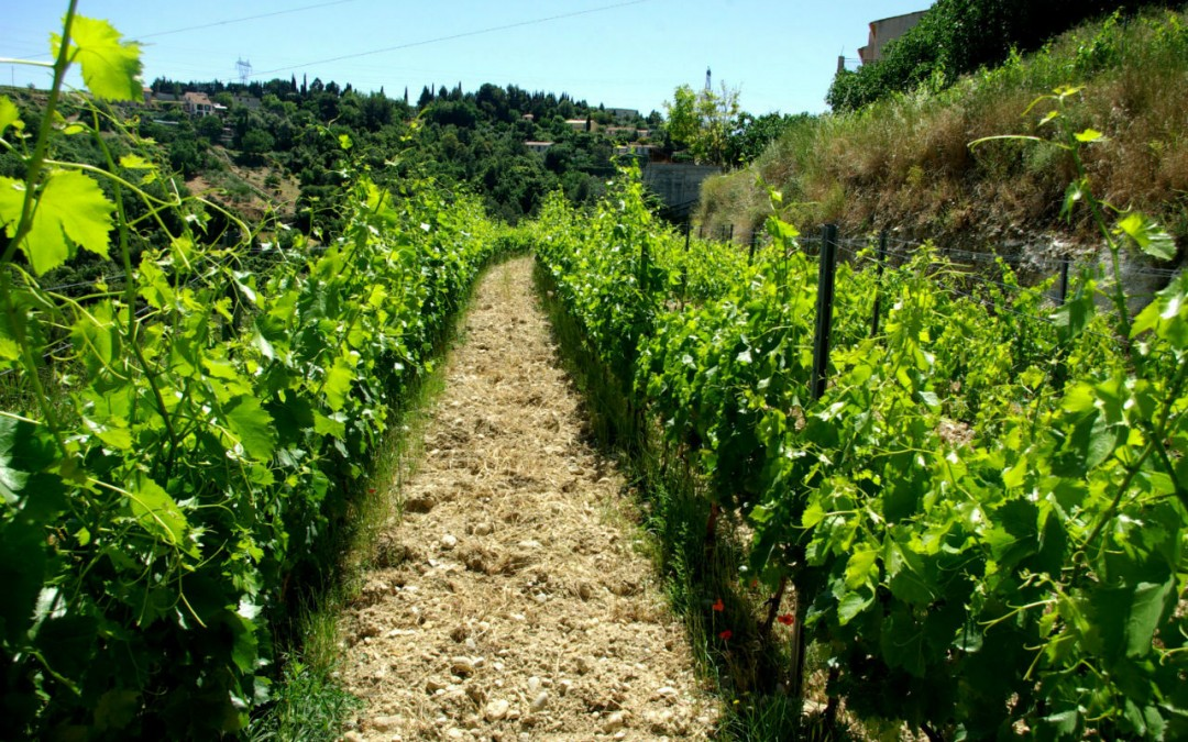 Immersion dans un domaine viticole !